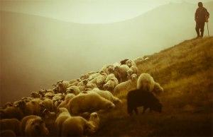 pastor_ovelhas